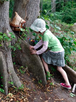Beech-Tree-Path