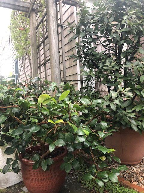 Garden Tip 8_2020