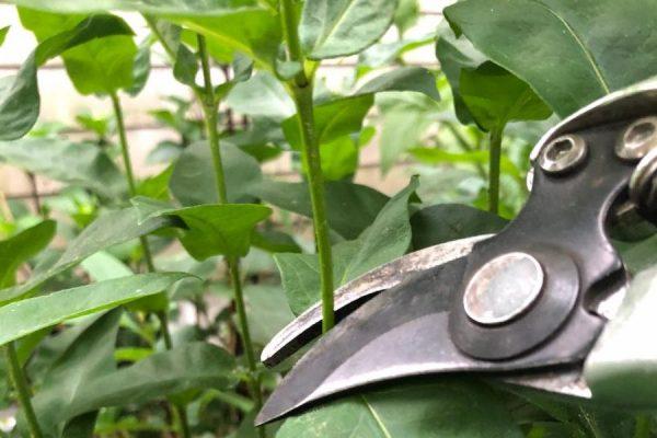 Garden Tip 16