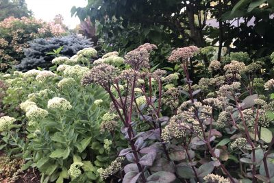 Garden Tip 23