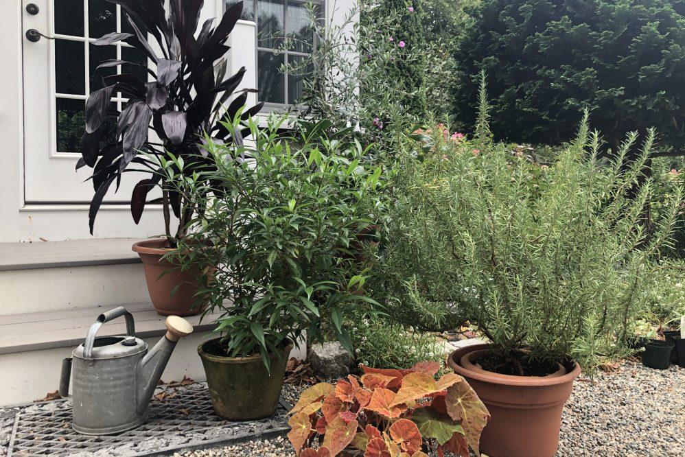 Garden Tip 27