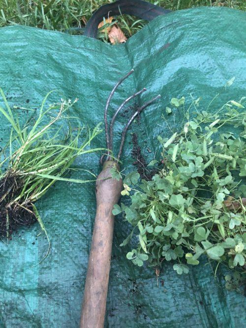 Garden Tip 29