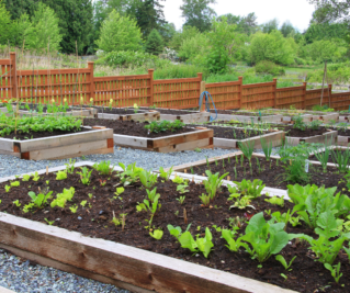 Garden Tip_Topdressing 2020