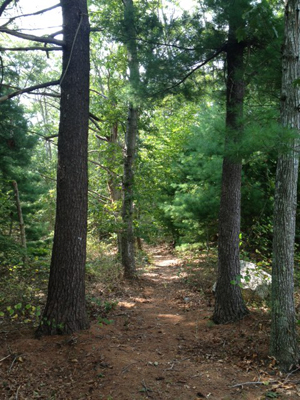 Beebe Wood Trail